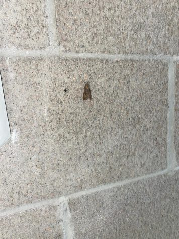 Teresa the moth